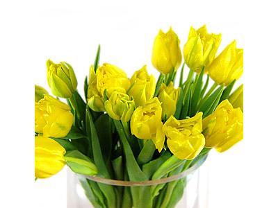 Image of 20 Yellow Tulips