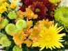 Image of Just Chrysanthemums by Clare Florist