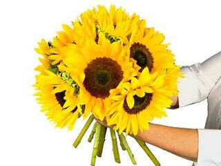 Sunflowers delivered to you by Clare Florist