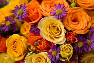 Colourful-roses