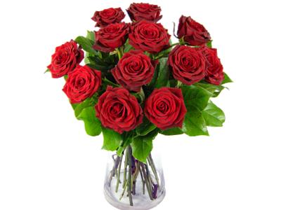 A romantic photo of 12 red roses