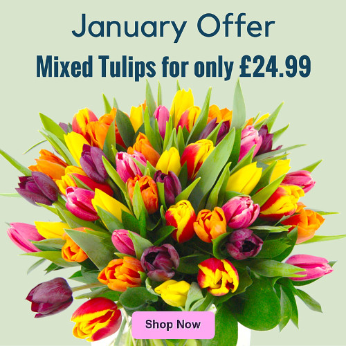 29 Percent off Mixed Tulips