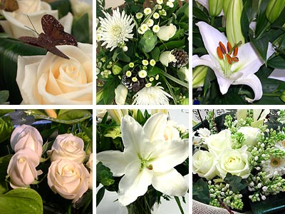 White Flower Collection