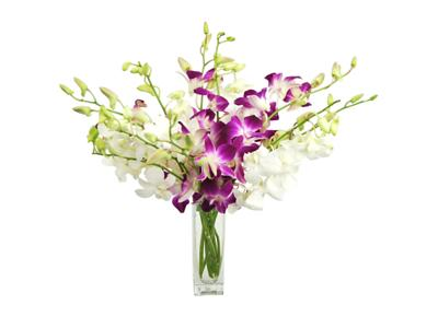 Rainforest Orchid Bouquet