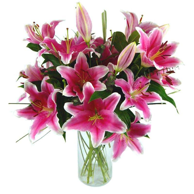 Sensation Lilies - Birthday