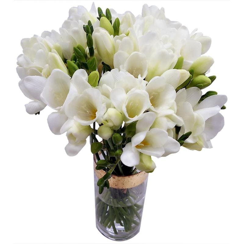 20 White Freesia