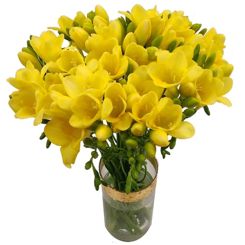 20 Yellow Freesia