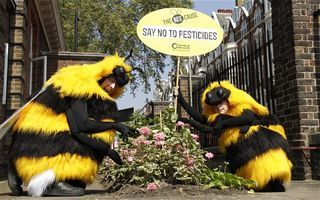 Giant Bees and the 1%: Protests Against Chelsea Flower Show