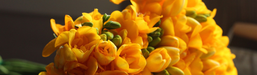 Orange Freesia