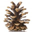 Link to Cones