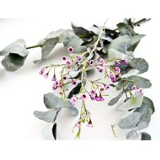 Link to Eucalyptus