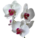 Link to Orchids