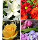 Link to Various Flowers