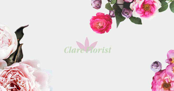 The Clare Florist Florapedia Part Six: Peonies