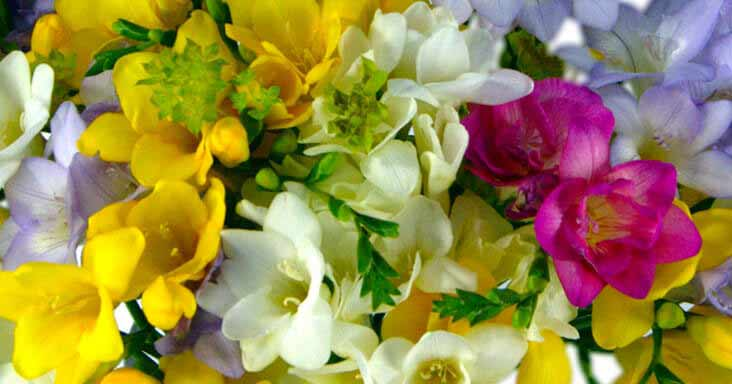 Rosmeria Flowers 30% Off Special Offer!