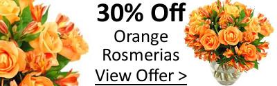 Save 30% off Orange Rosmeria