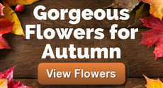 Order Autumn Flowers Online, Beautful Fresh Autumn Flowers to buy