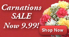 Carnation Flash Sale - Only £9.99!