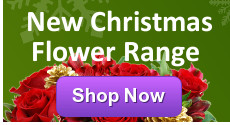 Clare Florist Christmas Flower Selection