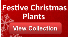 Clare Florist Christmas Plants