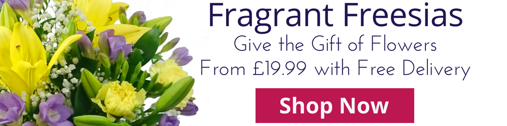 Fragrant Freesia Special Offers