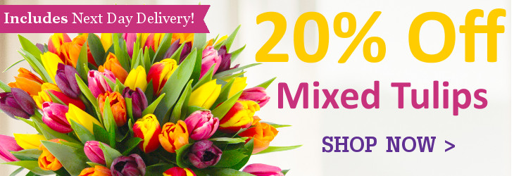 Mixed Tulips - Save 20%