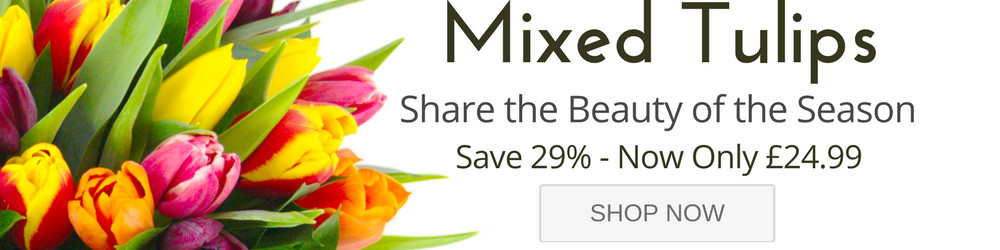 Mixed Tulips Special Offer