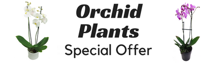 Buy one get one free on Orchid Plants