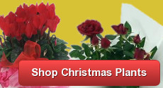 Order Christmas Plants with Clare Florist