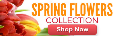 Order Spring Flowers from Clare Florist
