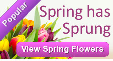 Spring Flowers - Order Flowers for Spring from Clare Florist