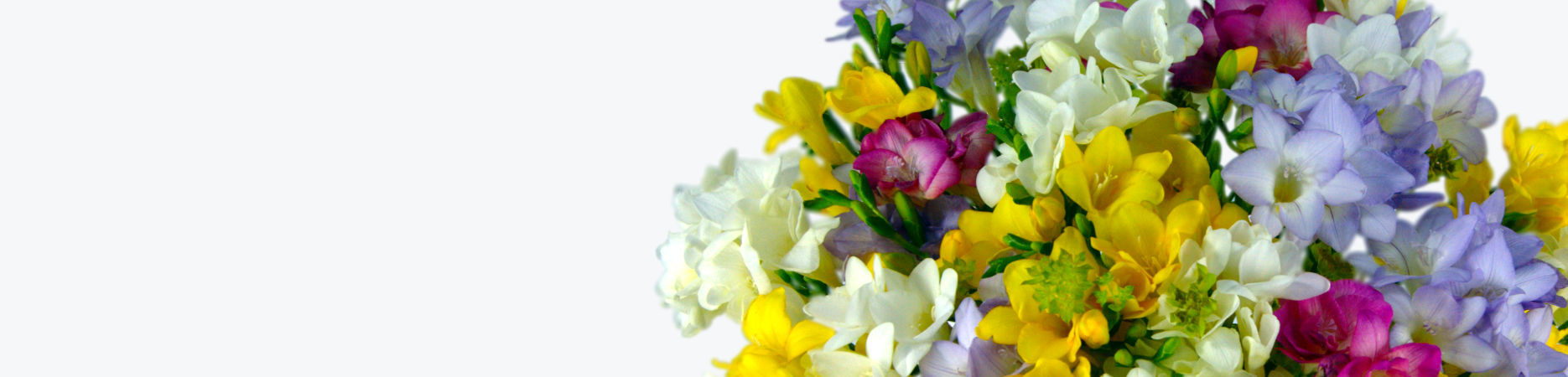 Freesia Fragrance Special