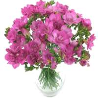 Irresistible Cerise Freesia Bouquet