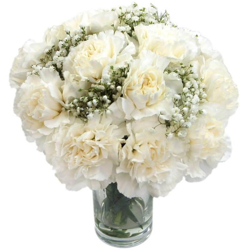 White Carnations - Birthday