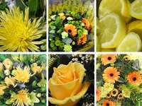 Yellow Flower Collection
