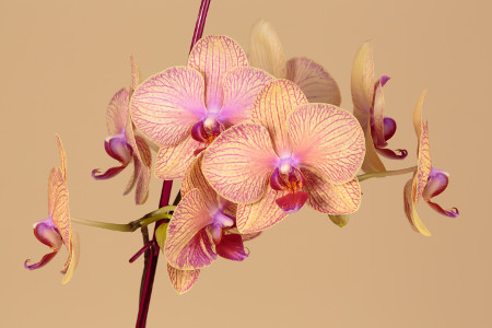 The Secret Meaning Of Flowers Part 6 Orchids Clare Florist Blog
