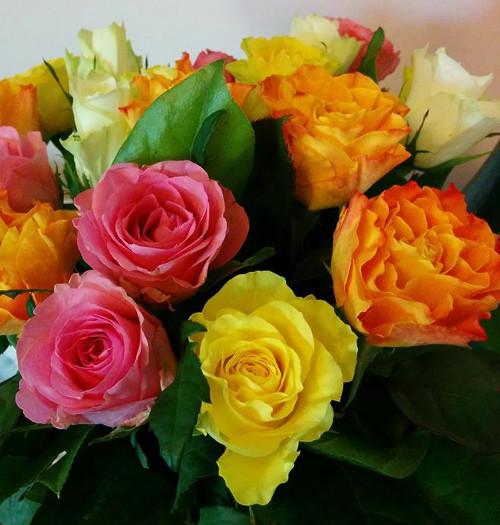 Rainbow Roses Candid Shot
